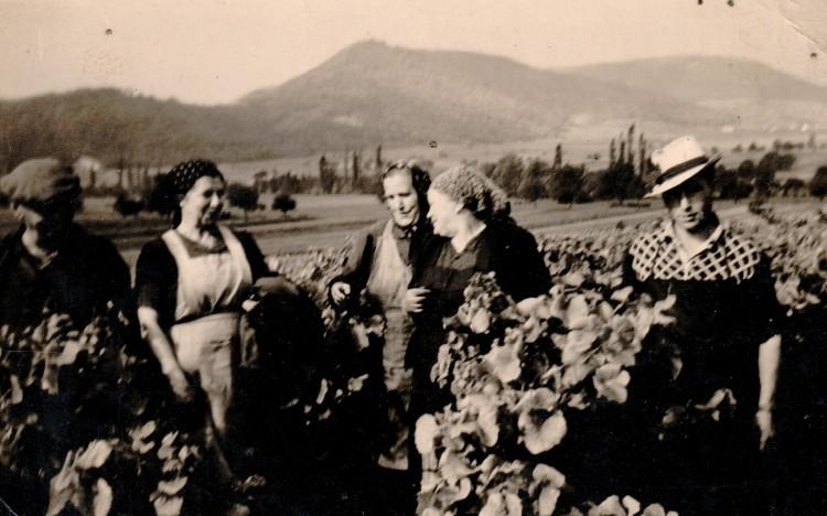 Weinbau damals